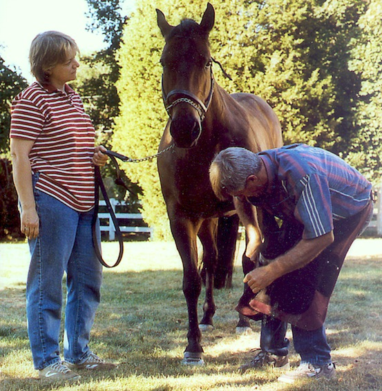 older horse receives hoof care from farrier as owner watches