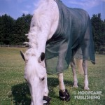 Veterinarians Connect the (FDA-Approved) Prascend® Dots: Will Senior Horses Need to Change to the Ne...