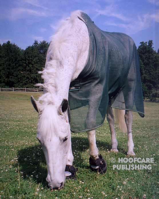 Cushings insulin resistance pony Hoofcare Publishing