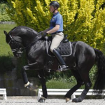 Video: Dressage Star Totilas Injured in Training Two Days After Live Television Performance; Rath Ho...
