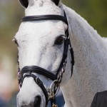 T.I.P.: Thoroughbred Incentive Program for Sport Horses Launched by The Jockey Club