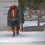 Surviving January: Tips for Deep Freeze Horse Care from Michigan State's Vet School Experts