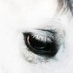 Third-Eyelid Tumors in Horses: Schedule a Yearly Eye Exam with Your Veterinarian