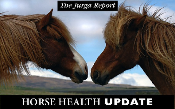 topic header for The Jurga Report blog on Equisearch.com