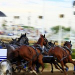Calgary Stampede Chuckwagon Race Tragedy Kills Three Horses, Injures More