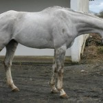 Ex-Racehorse Reality TV Part 1: Mr. Lloyd's Makeover for the Dublin Horse Show