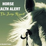 Horse Health Alert: Mare in California Tests Positive for Contagious Equine Metritis