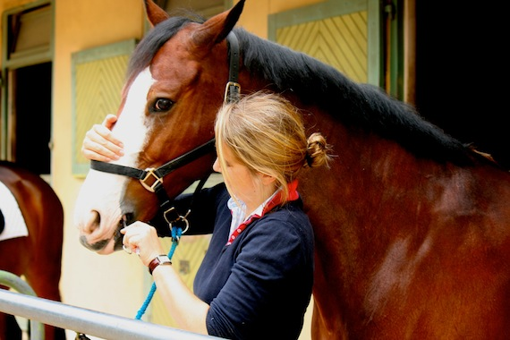 University of Vienna researcher tests cortisol in horse saliva.