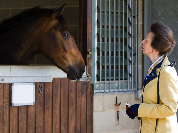 Princess Anne looks at adoptable World Horse Welfare case