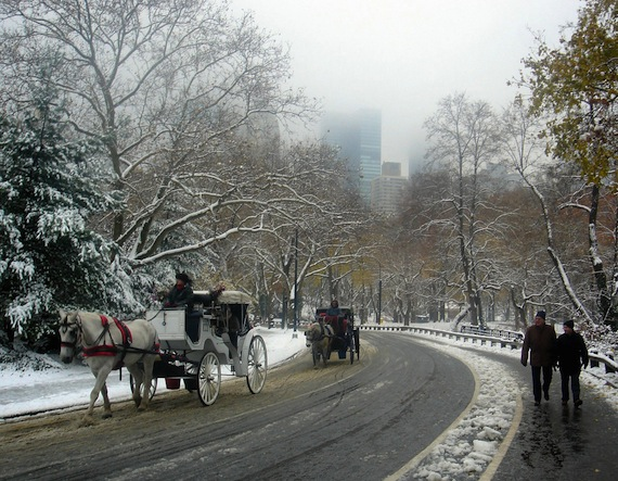 carriage horses Central Park