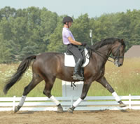 10 Tips for Better Dressage Trot Lengthenings