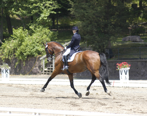 Grand Prix Dressage rider in extended trot