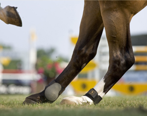 Jumping Horse Hocks