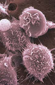 Microscopic view of stem cells