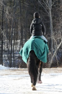 Using a cooler on your horse