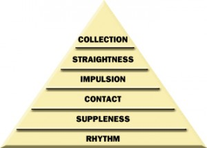 Dressage training pyramid