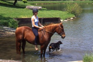 Tips for Crossing Water Safely While Riding from EQUUS | Equisearch