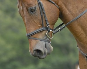 Too-tight flash noseband