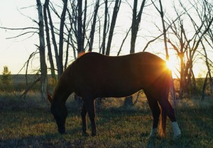 During your horse's twilight years, don't just turn him out to fend for himself — especially in a herd situation. Daily care and monitoring are important. | Photo by Betsy Lynch