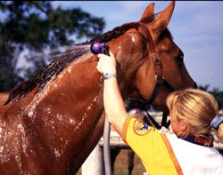 Buy Hot Tub >> Basics of Bathing Your Horse | EquiSearch